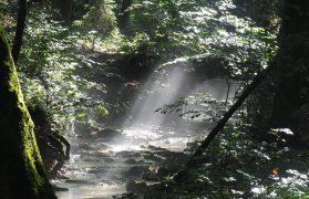 Ukrainiec, ukrywał się w lesie, Potwór z Lasu