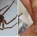 Jadowite pająki w szkołach, cztery placówki zamknięte. Wkrótce wylęgną się kolejne!