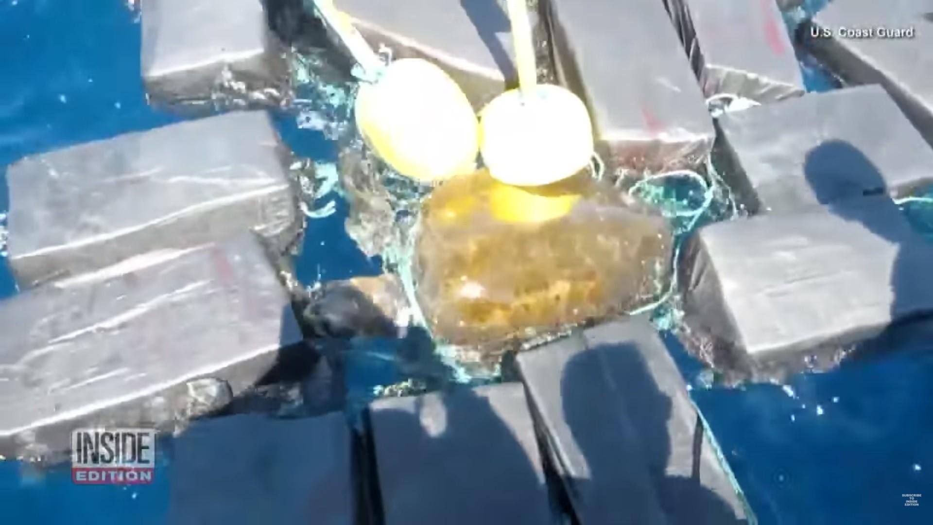 żółw, kokaina, narkotyki przemyt
