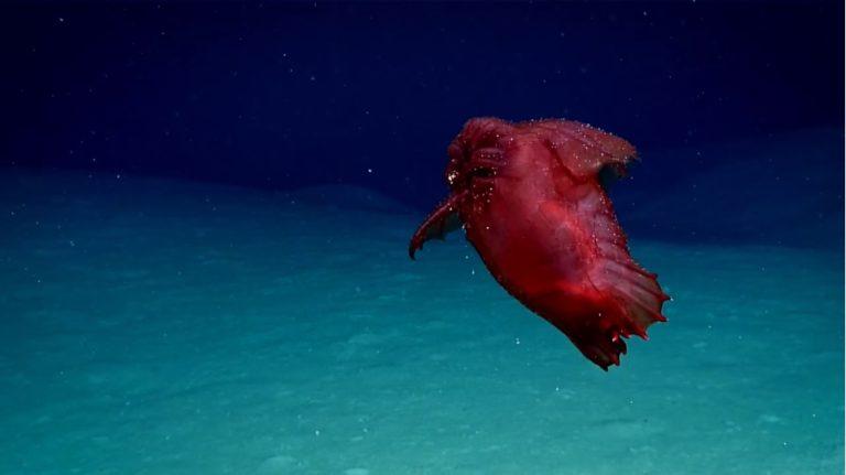 """""""Bezgłowy kurczak"""" – tak tego STWORA ochrzcili operatorzy podwodnych robotów badających dno oceanu. Tymczasem jest to… [VIDEO]"""