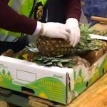 To dopiero ANANASY! Zamiast do warzywniaka, trafiły w ręce POLICJI! Owoce posłużyły do POTĘŻNEGO PRZEMYTU [VIDEO]