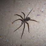 Boisz się pająków w domu? Mamy dla Ciebie bardzo złe wiadomości