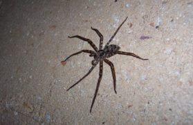 pająków, zabił pająka palnikiem, spalił mieskzanie
