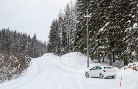 samochód, las, zwłoki