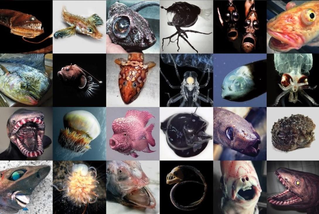 rosyjski wędkarz, ryby, głębiny, potwory