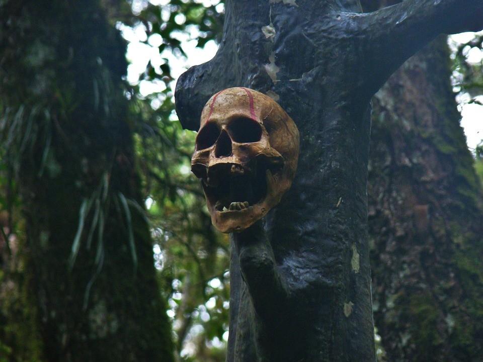 głowy, czaszka, czaszki, rytuał, archeologia, historia, wykopaliska
