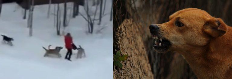 MASAKRA w Nowej Soli: znalazł się w złym miejscu o złej porze, zginął ROZSZARPANY przez psy!