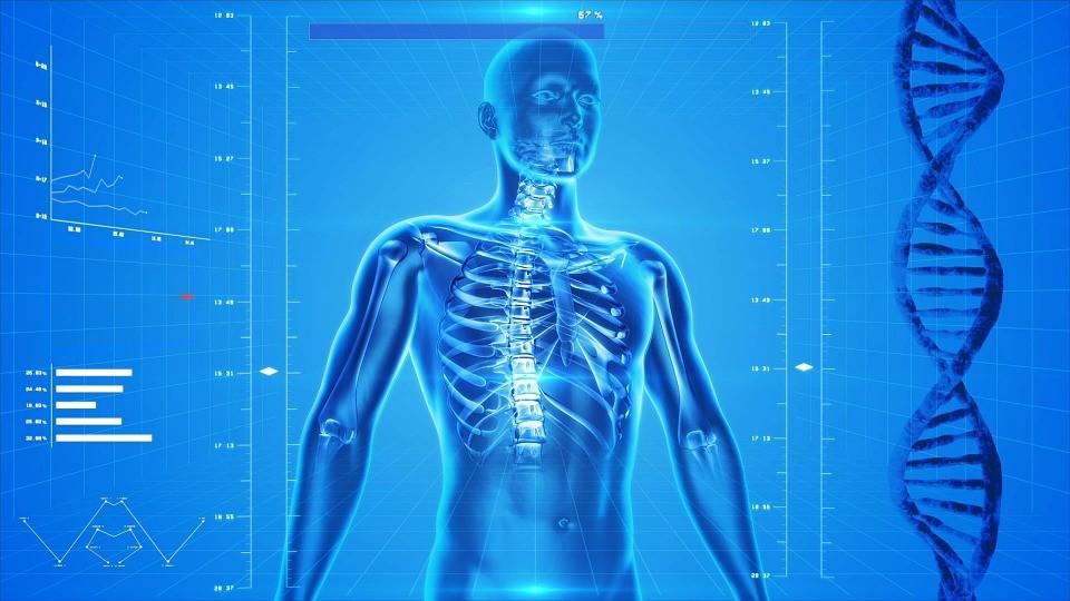 organ, anatomia