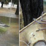 Przerażające skutki powodzi: KROKODYLE i WIELKIE PAJĄKI w miastach! [FOTO]