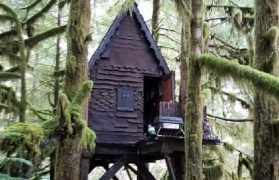domek, drzewo, las