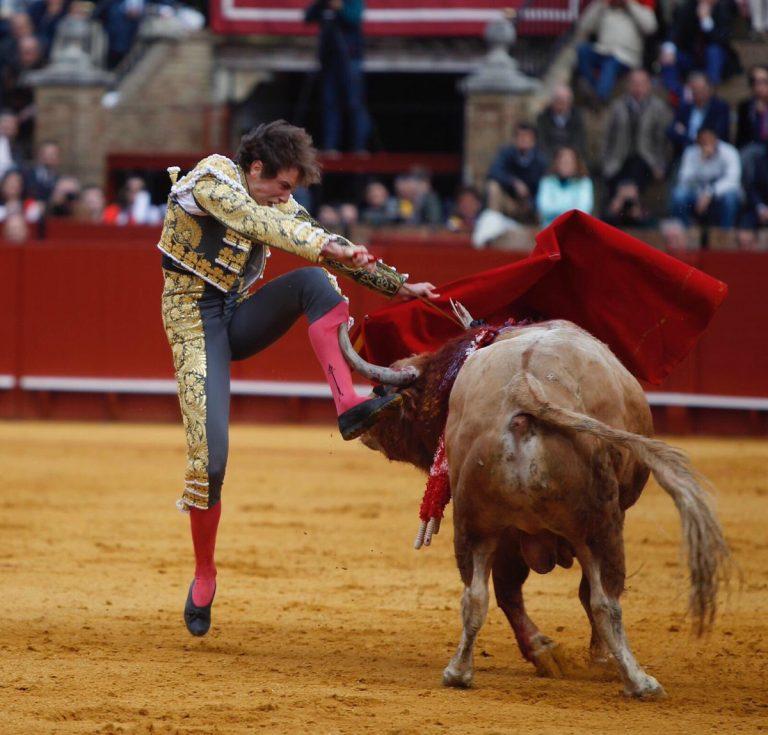 MASAKRA na korridzie: potężny byk przebił nogę słynnego matadora! Jego stan jest bardzo poważny! PRZERAŻAJĄCE NAGRANIE [VIDEO]