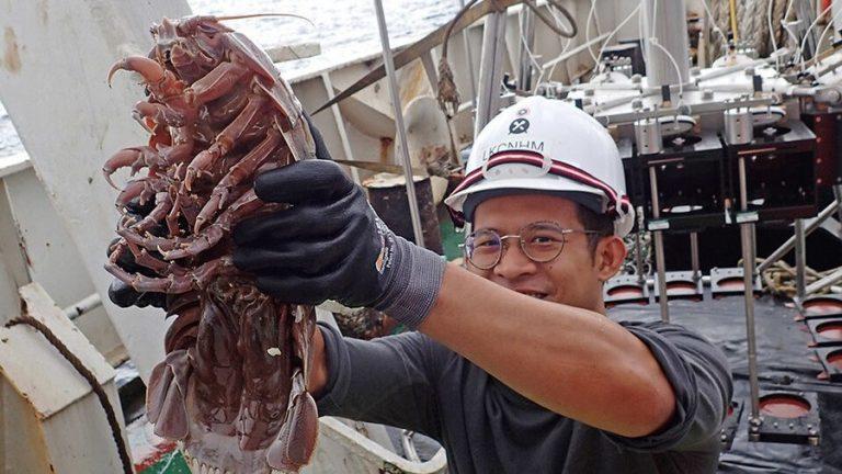 Zeszli na dno Oceanu Indyjskiego, wyłowili setki NIEZNANYCH nauce stworzeń! [FOTO]