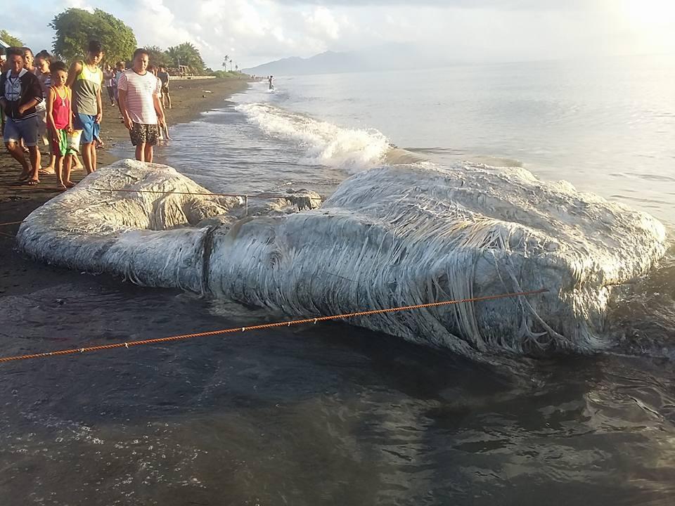 potwór wyrzucony na plażę