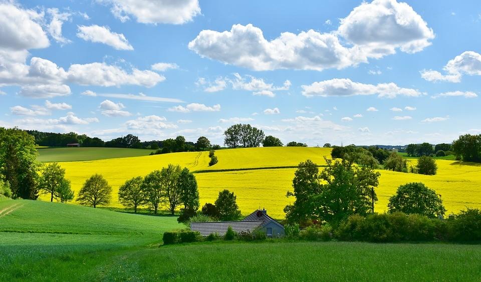 wioska, łąka, pole, lubelszczyzna, dąbrowa, wieś
