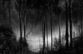depresją, las, drwale, wózek
