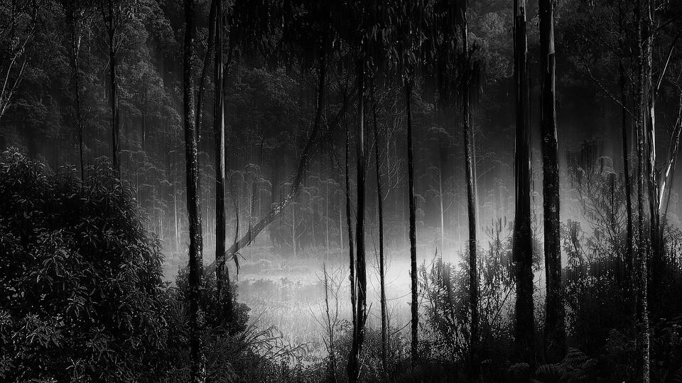 depresją, las, drwale