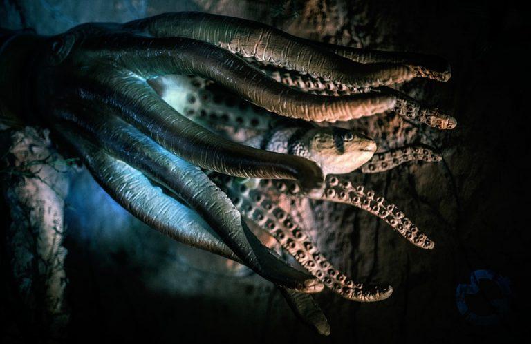 Ośmiornice z KOSMOSU? Badacze opublikowali NIEWIARYGODNĄ teorię na temat pochodzenia tych zwierząt!