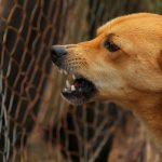 Watahy bezpańskich psów sieją TERROR! Upodobały sobie dzieci – ZABIŁY już sześcioro malców!