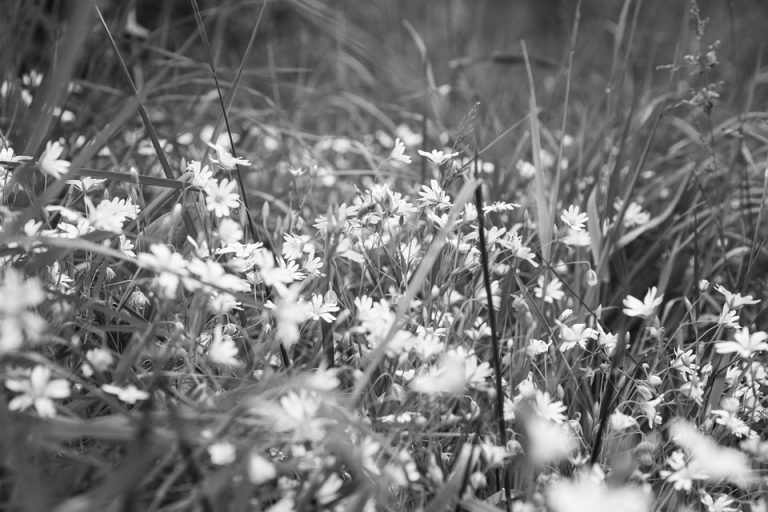 Małopolska: w czasie koszenia łąki dokonali MAKABRYCZNEGO ODKRYCIA