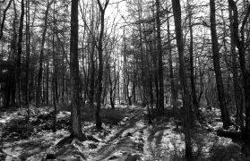 lesie, horror w lesie, grób, lasu, zgwałcili go kluczem do kół