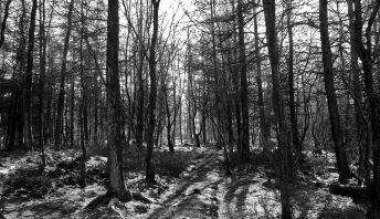 horror w lesie, grób, lasu, zgwałcili go kluczem do kół
