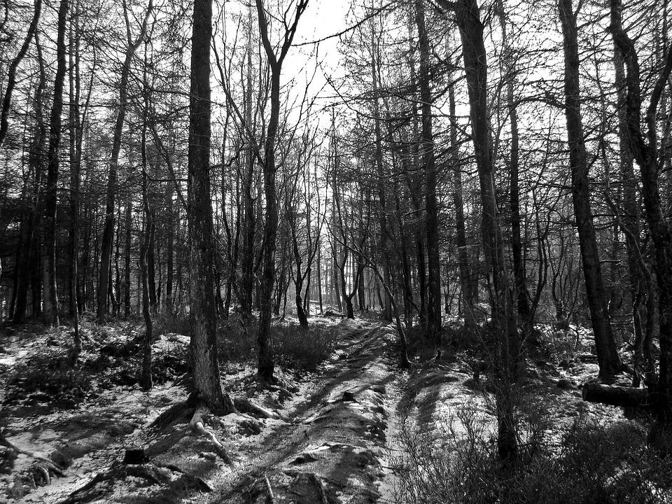 horror w lesie, grób