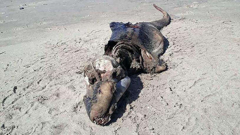 morze wyrzuciło stwora