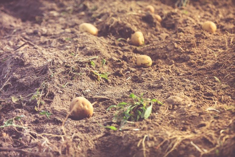 Sadził ziemniaki na polu swojej partnerki. Nagle dokonał MAKABRYCZNEGO ODKRYCIA