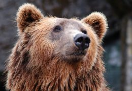 niedźwiedzia, niedźwiedź, wybieg z niedźwiedziami