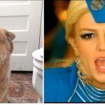 [VIDEO] Pies nucący piosenkę Britney Spears zrobił furorę w Internecie!