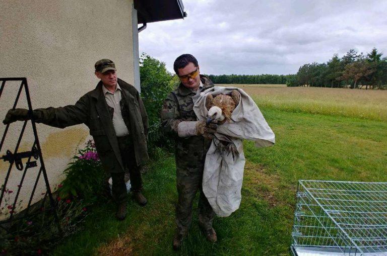 Leśnicy w SZOKU: znaleźli w Polsce ptaka, który WYMARŁ 100 lat temu!
