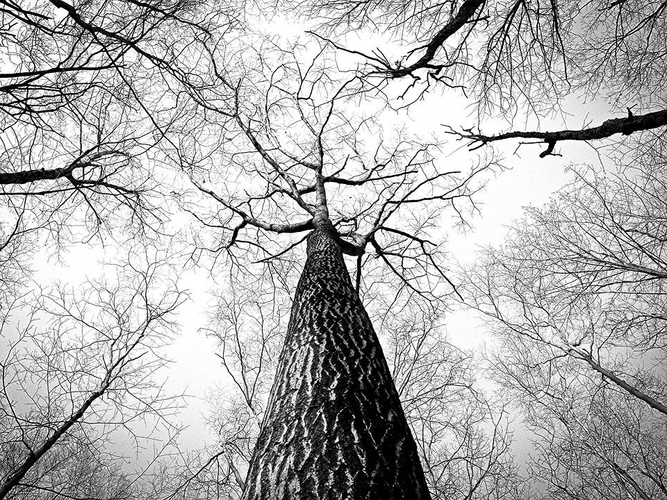 powiesił się, staruszka, las