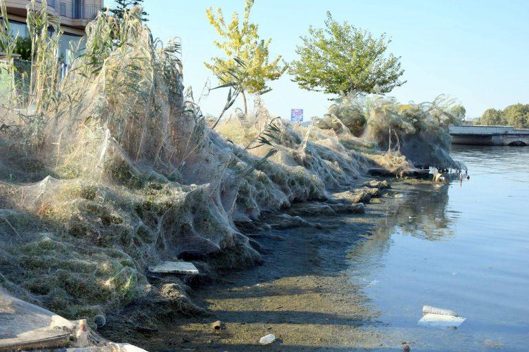Przerażające! Tysiące pająków utkało 300-metrową sieć wzdłuż plaży! Wyjaśnienie jest proste [FOTO]