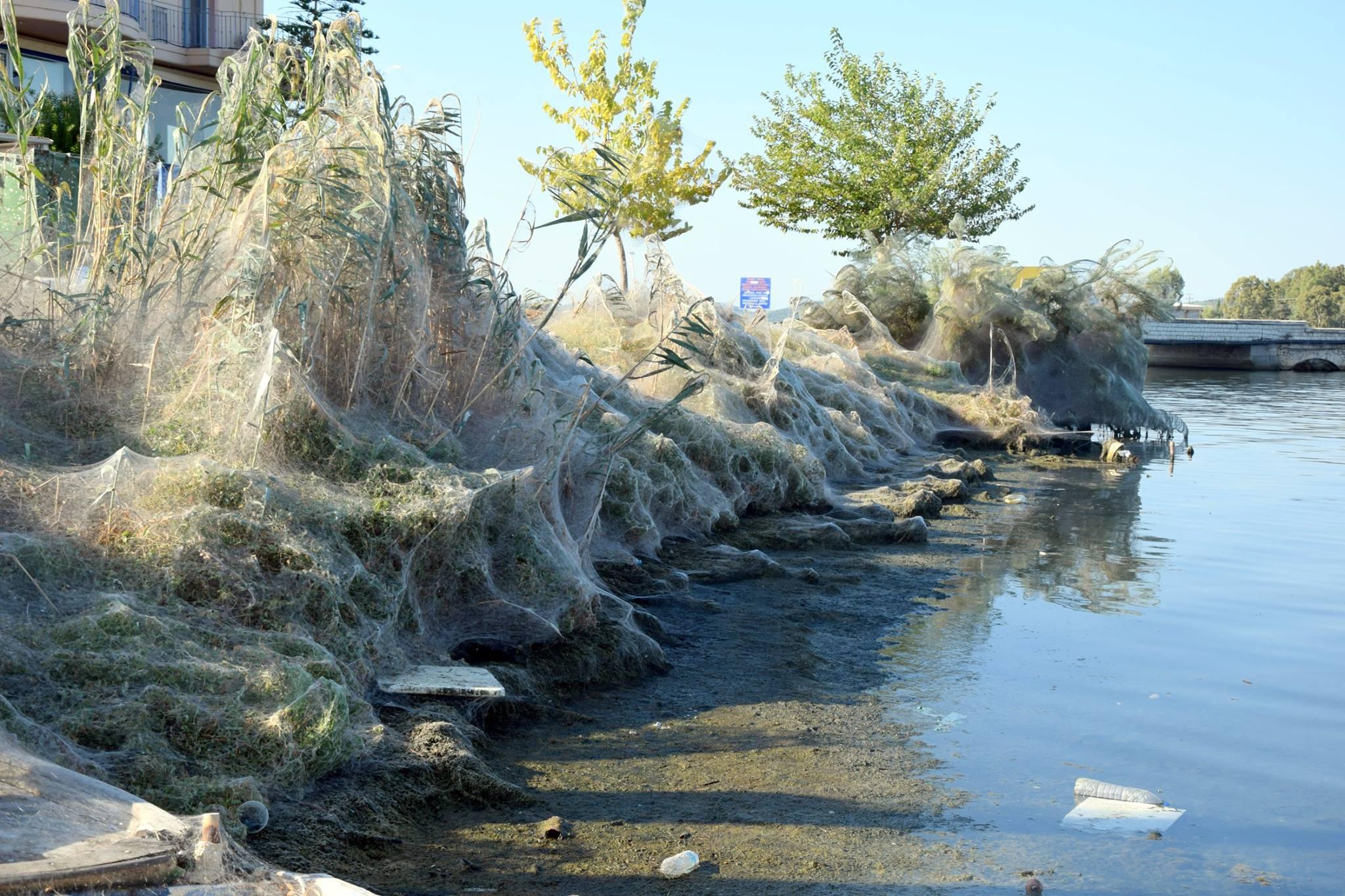 sieć pająków setki uwiły nad morzem