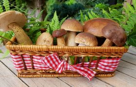 19 kilogramów borowików, grzybiarze