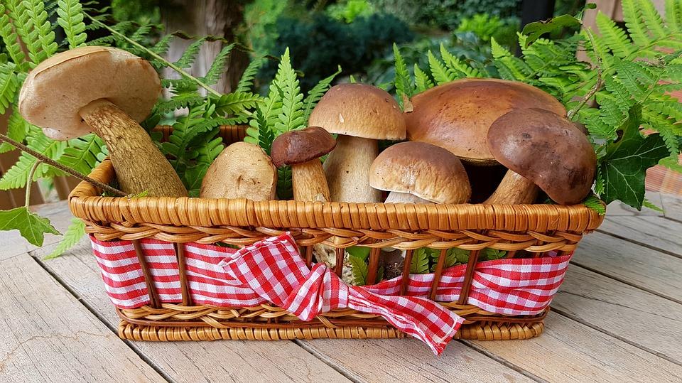 grzybów, 19 kilogramów borowików, grzybiarze