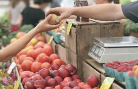igły w owocach
