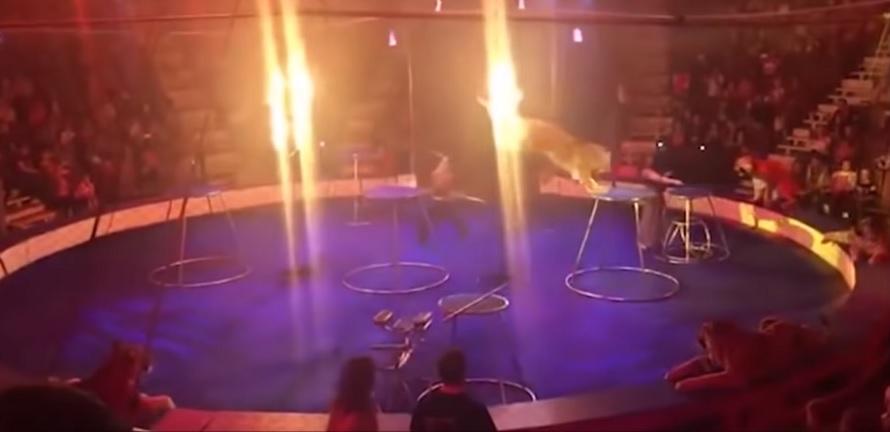 pokazu cyrkowego
