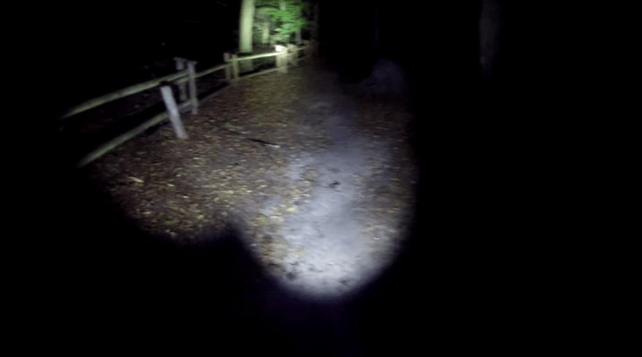 las w nocy, poszukiwania staruszki