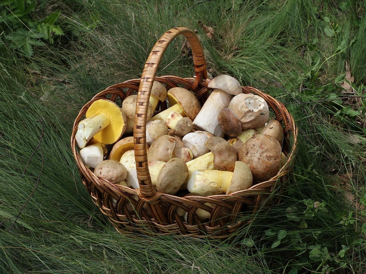 grzybów