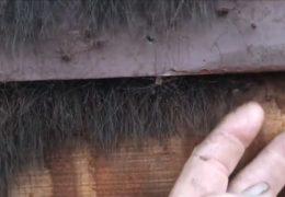 płot z pająkami