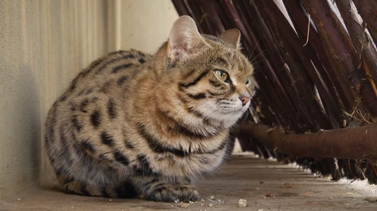 Koty lepsze od psów? Uczeni przeprowadzili eksperyment. Wyniki ich ZASKOCZYŁY
