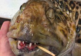 ryba z głębin, stwór