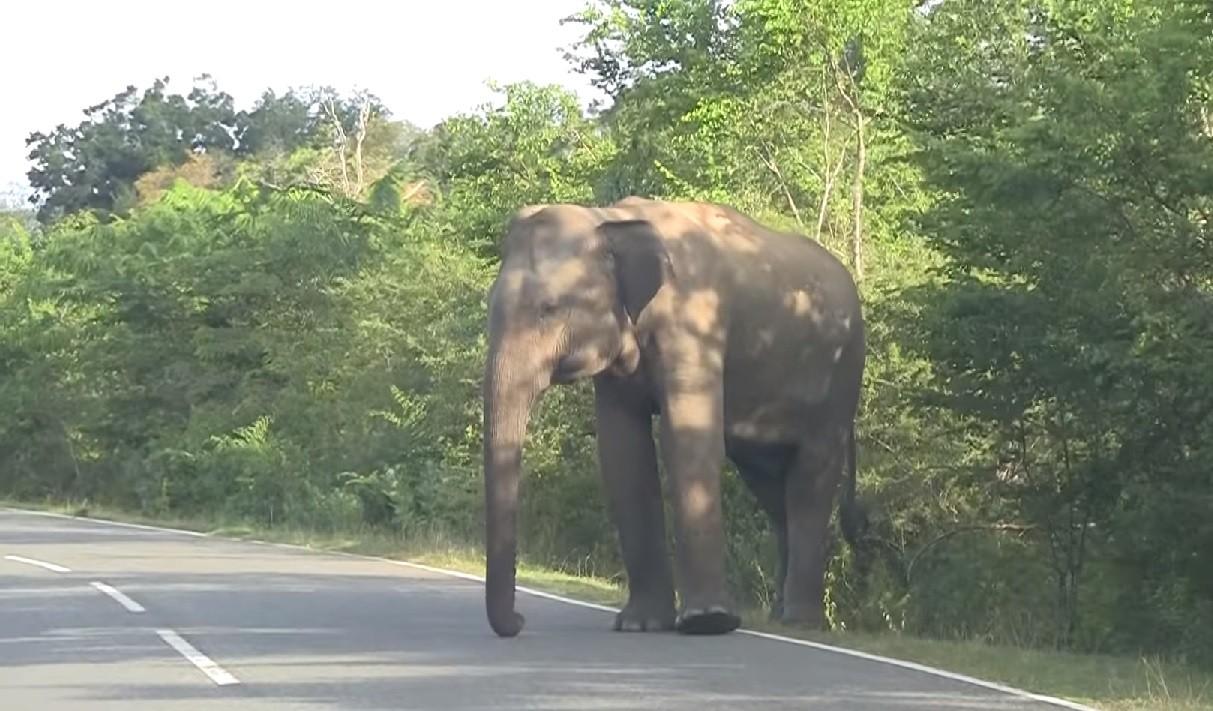 stłuczka ze słoniem