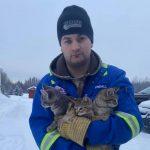 Oblał kocięta ciepłą kawą! Dzięki temu uratował im życie!