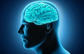 mózg, dieta, zdrowa dieta