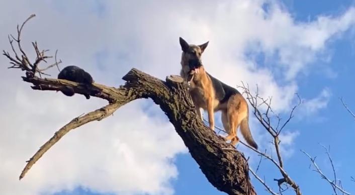 owczarek niemiecki, pies, ratowanie psa