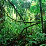 Turystka wraz z trójką dzieci przez miesiąc błąkała się po dżungli! Przeżyli dzięki (…)!