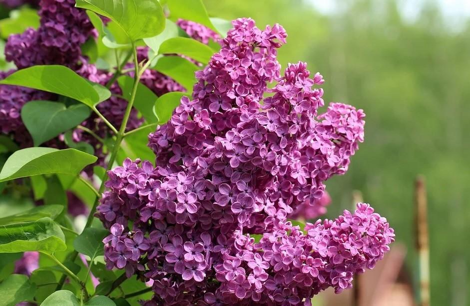 wiosna bzy przyroda pogoda