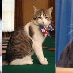 Dziś Światowy Dzień KOTA. Oto RANKING najsłynniejszych kotów w historii świata
